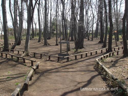 国分寺 雑木林