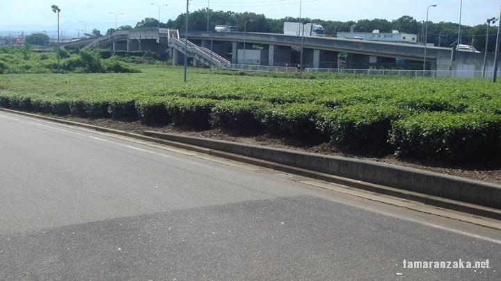 箱根ヶ崎断層