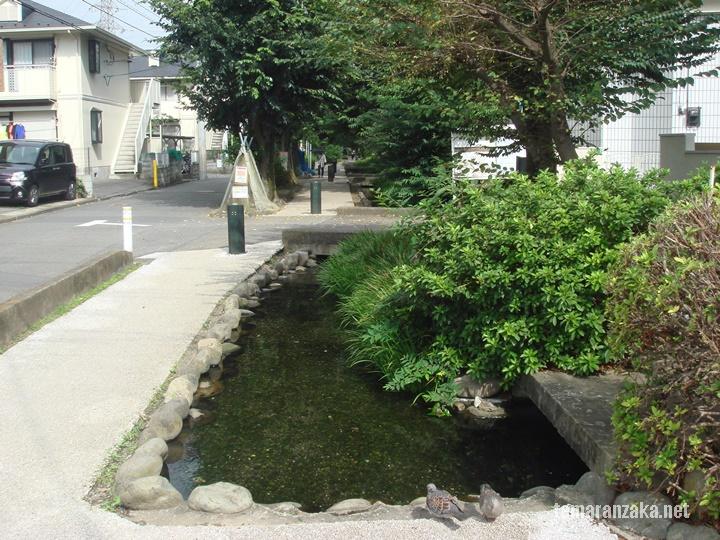 野火止用水緑道
