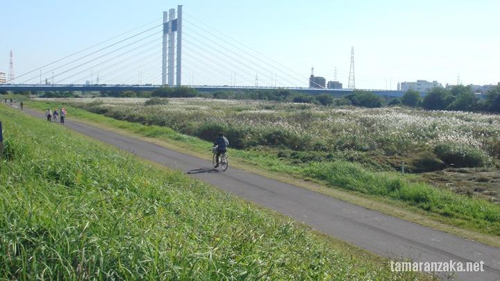 多摩川 かぜのみち