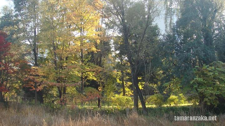 国分寺 姿見の池
