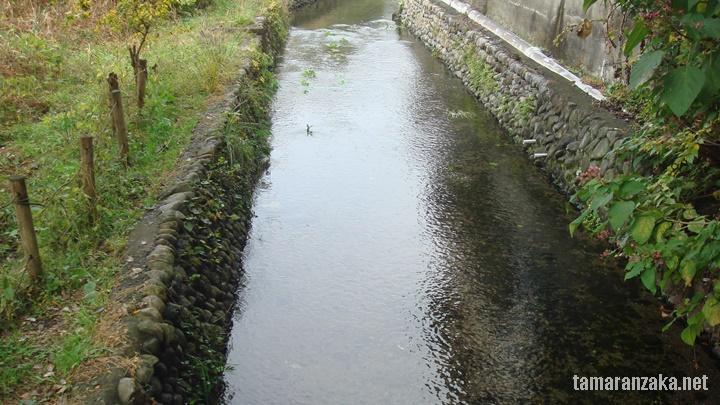 「矢川」の今 古い石積みが絵になっています